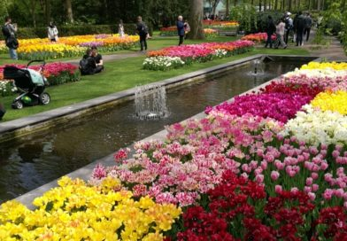 Un printemps rempli de millions de tulipes à Keukenhof