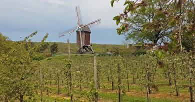 La meilleure balade dans les vignes en Flandre